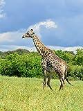 Lais Puzzle Giraffe 1000 Teile