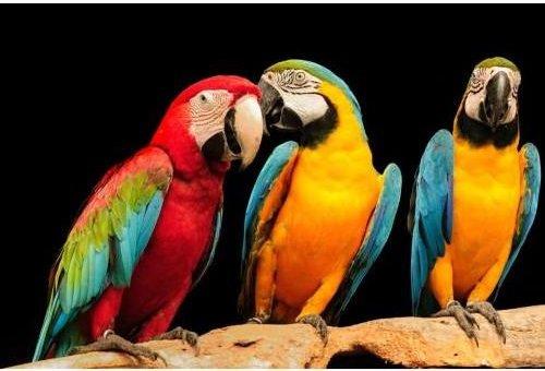 3 D Ansichtskarte Aras Postkarte Wackelkarte Hologrammkarte Tiere Vogel Vögel Papagei
