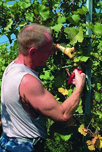 Felco Gartenschere Felco 310 mit Edelstahlklinge - 6