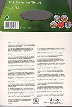 Großpackung Mit 20 Pastellfarbene Tulpen Farbmischung, Zwiebelgröße 1112 1