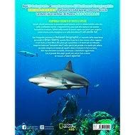 Il-grande-libro-degli-squali