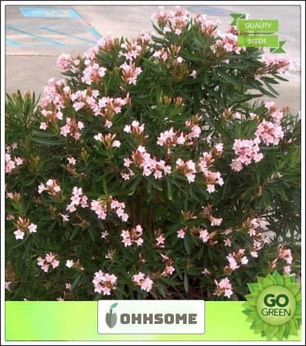 Pinkdose Cut Baumsamen Pinck Red Oleander Baumsamen Winter Season Seeds Seed