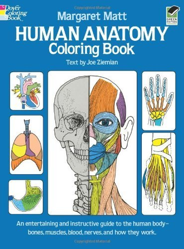 Human Anatomy Coloring Book (Dover Children's Science Books) by Matt, Margaret, Ziemian, Joe (1982) Paperback