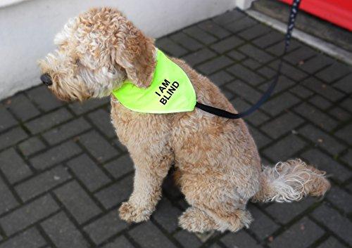 Spoilt Rotten Pets Hi Viz Reflektierende Ich bin Blind–Alarmmeldung ACHTUNG Hund Bandana–Vier Größen einstellbar von einem Tiny Chihuahua, ein extra großes ST BERNARD (Gr. 4Extra große Hund–passt auf 58,4cm–68,6cm Hals) (Extra T-shirt Große Hund)