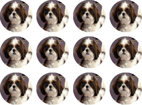 shih-tzu-wt-br-bkedible-cake-toppers-12-of-38mm-15inch-229