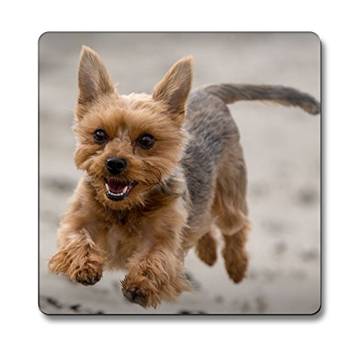 Yorkshire Terrier Dog-Sottobicchiere con (Yorkshire Terrier Coaster)