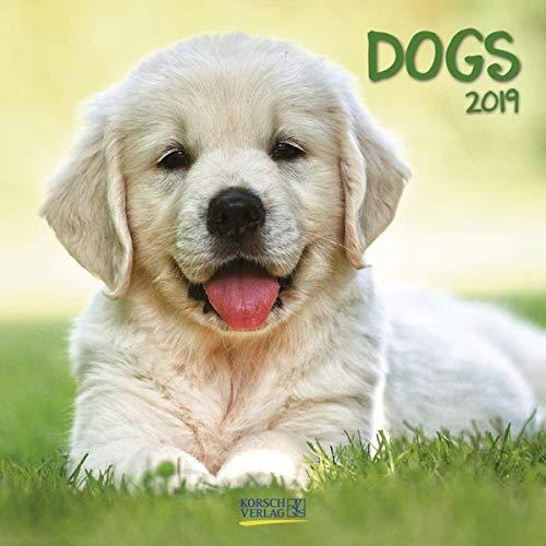 Dogs (BK) 224719 2019: Broschürenkalender mit Ferienterminen. Hunde und Welpen. 30 x 30 cm