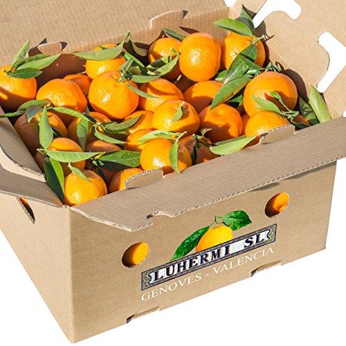 Mandarinen aus Valencia (Spanien)