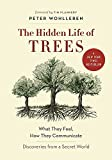 Image de The Hidden Life of Trees : What They Feel, How They Communicate - Discoveries from a Secret World