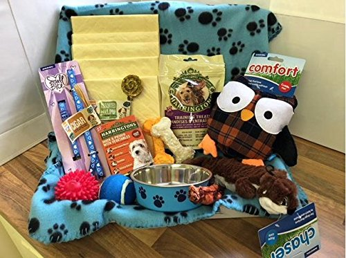 Blue Small Dog Hamper with Heart Collar & Lead