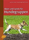 Ideen und Spiele für Hundegruppen: Hundekurse sinnvoll gestalten