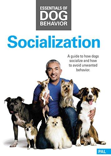 Socialization Hunde Sozialisierung Cesar Millan Grundlagen der Hundeerziehung Essentials of Dog Behavior Hundeflüsterer