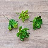 WINOMO 4teilig Sukkulenten gewidmet Sukkulenten Pflanzen Sukkulenten nicht aus Kunststoff für das Zuhause (grün Schlumbergera bridgesii, Lotus, Lotus und Kakteen Small Punkt Stein)