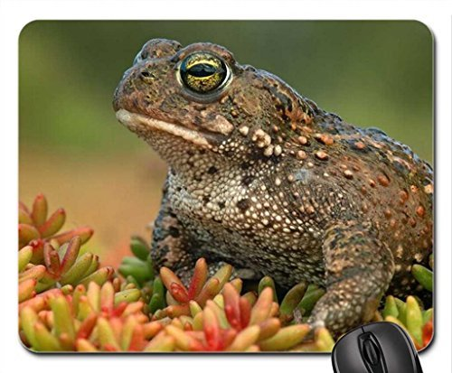 tode-frog-mouse-pad-mousepad-frogs-mouse-pad