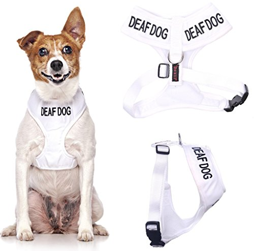 DEAF DOG (Dog Has Limited/No Hearing) White Colour Coded Non-Pull Front and Back D Ring Padded and Waterproof Vest Dog Harness PREVENTS Accidents By Warning Others Of Your Dog In Advance