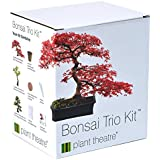 Plant Theatre - Bonsai Trio, Kit per la coltivazione di 3 bonsai