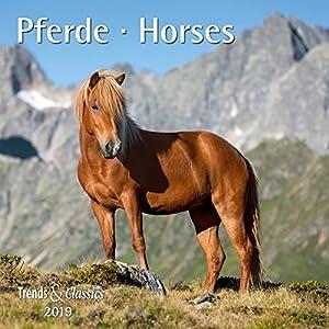 Pferde - Kalender 2019 - DuMont-Verlag - Broschurkalender mit Poster und Platz zum Eintragen - 30 cm x 30 cm (offen 30 cm x 60 cm)