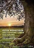 Das geheime Leben der Bäume: Was sie fühlen, wie sie kommunizieren. Der Bildband. Mit dem vollständigen Text der Originalausgabe - Peter Wohlleben