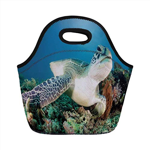 53ff6a06e1e Portable Bento Lunch Bag,Turtle,Photo of Green Turtle And Lion Fish on  Tropical