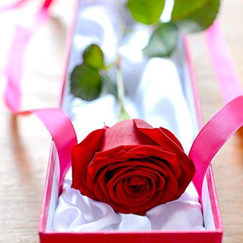 luxury-single-red-rose-box-gift-fresh-flowers-free-chocolates