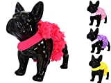 Lushpetz Rosa, Gelb oder Violett Petal Flower Sicherheitsgurt mit Spitze von-XS für kleine Hunde Rassen