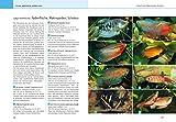 Aquarium, Das große GU Praxishandbuch - 7
