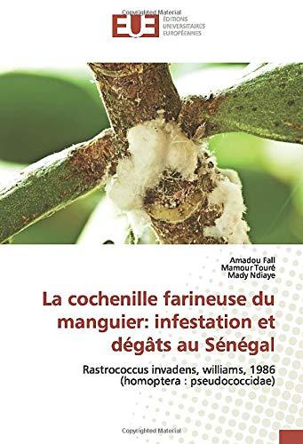 La cochenille farineuse du manguier: infestation et dégâts au Sénégal: Rastrococcus invadens, williams, 1986 (homoptera : pseudococcidae)