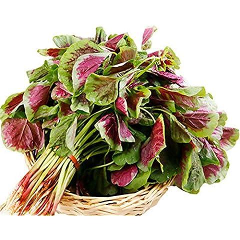 Red semi di amaranto - 100 pc / lotto - Red Fioritura Alberi