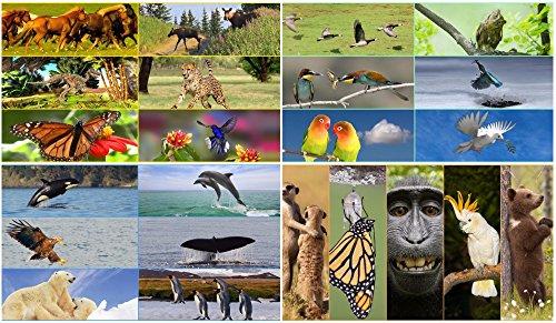'25-Segnalibro con effetto Wackel animale: lentikular-Set con cambio Wackel immagini/immagini (Flips) animali segnalibro-Cambio fino a 8immagini in un segnalibro