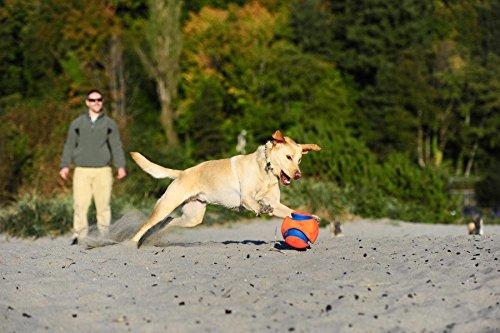Chuckit-Kick-Fetch-Dog-Toy-19-cm-Large