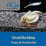 AQ4Aquaristik Urzeitkrebse Mix - Zuchtansatz - Triops und Feenkrebse Eier - mit Anleitung