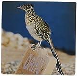 3drose LLC 8x 8x 0,25Arizona Lake Havasu City Wegekuckuck Bird JAYNES Galerie Mauspad (MP _ 87395_ 1)
