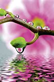 Artland Qualitätsbilder I Wandbilder Selbstklebende Wandfolie 80 x 120 cm Botanik Blumen Blüte Foto Pink Rosa D0GB Orchideenzweig mit Wasserspiegelung