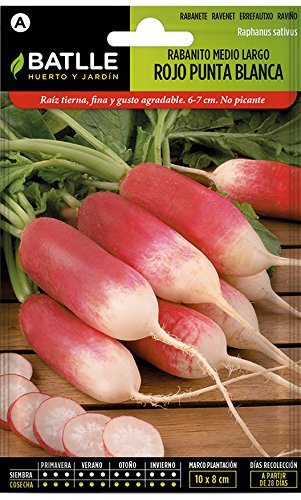 Batlle Gemüsesamen – Radieschen Mittelgross – weisse Spitze (1800 Samen)