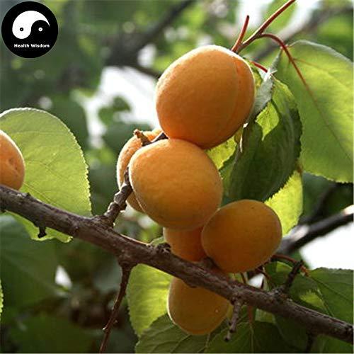 Shopmeeko Kaufen Sie Aprikose Obstbaum Semente 20pcs Pflanze Armeniaca Vulgaris für chinesische Xing