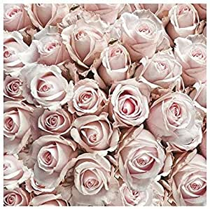Generique 20 Serviettes en Papier Titi Flower 33 x 33 cm