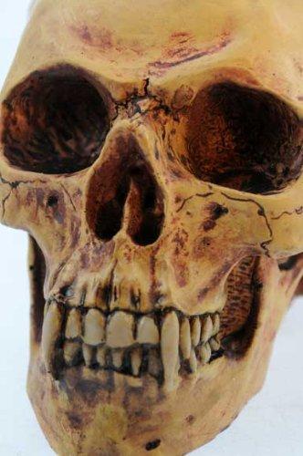 Ars-Bavaria - Teschio di vampiro Markus Mayer, stile gotico