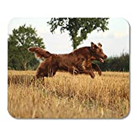 Deglogse Gaming Mouse Pad Mat, Black Action Flat Coated Retriever is Running on Stubble Mouse Pad, Desktop Computers mats