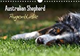 Australian Shepherd - Augenblicke (Wandkalender 2019 DIN A4 quer): Faszination Australian Shepherd - Berührende Augenblicke begleiten Sie durchs ganze ... (Monatskalender, 14 Seiten ) (CALVENDO Tiere)