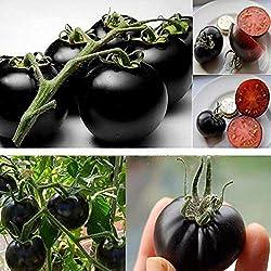 Semillas de Negro Tomate para Hogar y Jardin Pack de 30 granos
