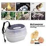 ZHUANFAFA Mini Incubatrice per Uova 12 Uova, Controllo Automatico della Temperatura E Dell'umidità, Display Digitale, Armadio Semitrasparente