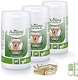 AniForte Zeckenschild für große Hunde 180 Kapseln - Natürlicher Zeckenschutz, Abwehr gegen Zecken und Parasiten, Anti-Zecken Schutz, Zeckenabwehr Naturprodukt, Hunde ab 35-50kg - Sparpack