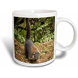 3dRose Costa Rica, La Paz, coatimundi–SA22rsp0004Rob Sheppard, 10,16x 7,62x 9,52cm, Keramik-Tasse, Keramik, Weiß