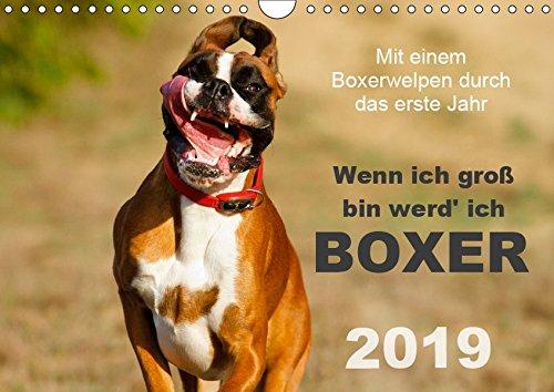 Wenn ich groß bin werd' ich Boxer (Wandkalender 2019 DIN A4 quer): Mit einem Boxerwelpen durch das erste Jahr - Monatskalender 2015 (Monatskalender, 14 Seiten ) (CALVENDO Tiere)
