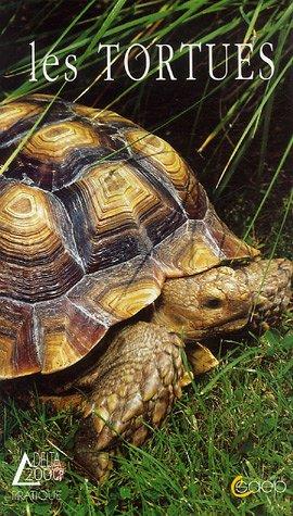 Les tortues par Marc Collignon