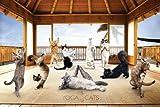 Yoga Cats (Hut) - Maxi Poster - 61cm x 91.5cm