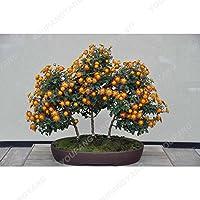 Las semillas 100pcs Gazania Rig flores raras hermoso crisantemo Bonsai para el jardín Gazania splendens Buliding Semillas caliente de la venta de semillas del crisantemo