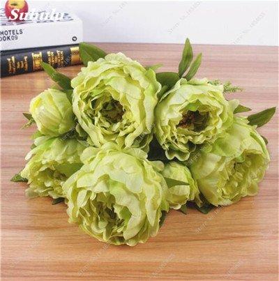 15 Pcs plantes ornementales Pivoine graines Paeonia suffruticosa Andrews Indoor Bonsai fleur pour jardin des plantes Pivoine Graines de fleurs 10