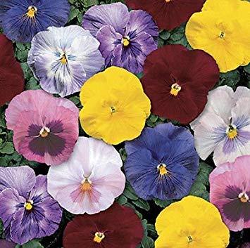 Seed-start-mix (Farmerly 50 Seeds of Pansy Delta Monet Mix Garden Starts Nursery)