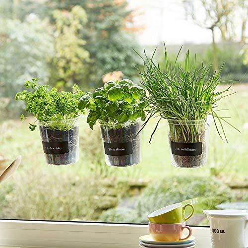 Trio de plantes aromatiques « Basilic » pour fenêtre de cuisineÉtiquette et craie - Fresh Herbs Trio - Jardin - Herbes Jardin - Décoration de fenêtre - Cadeau - Ø 13 cm - Hauteur : 16 cm.